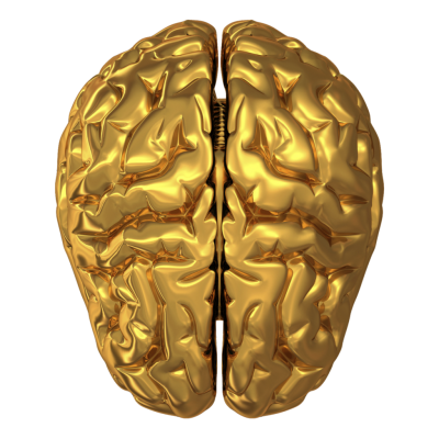 brain hd png 1199